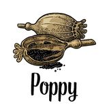 Poppy heads and seeds. Vector black vintage engraved Royalty Free Stock Photo