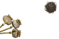 Poppy heads and seeds Royalty Free Stock Image
