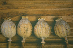 Poppy heads in vintage style Royalty Free Stock Image