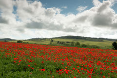 Poppy hills in Tuscany Stock Photo