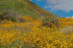 Poppy Hillside in Kalifornien stockfotos