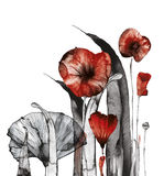 POPPY12 Royalty Free Stock Images