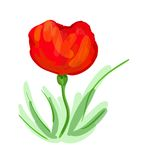 Poppy illustration Royalty Free Stock Images