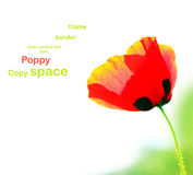 Poppy isolated on white Royalty Free Stock Images