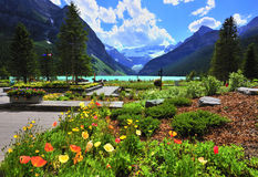 Poppy and lake louise Stock Photos