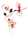 Poppy and Lily flowers. Watercolor illustration Royalty Free Stock Photography