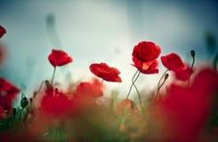 Poppy Meadow Fotos de archivo
