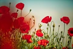 Poppy Meadow Imagenes de archivo