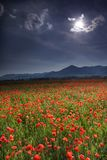 poppy meadow fotografia stock