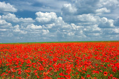 Poppy meadow landscape Royalty Free Stock Photography