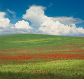 Poppy meadow Stock Photo