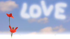 Poppy message with love Stock Photography