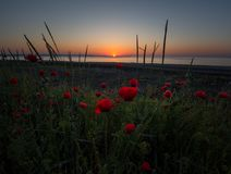 Poppy morning over Burgas royalty free stock images