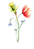 Poppy and Narcissus flowers Stock Images