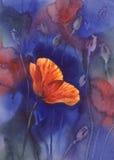 Poppy at night watercolor vector illustration