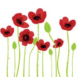 Poppy over white background Royalty Free Stock Photos