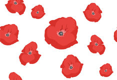 Poppy pattern Stock Photography