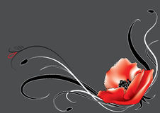 Poppy pattern. Red poppy for design. For text Royalty Free Stock Image