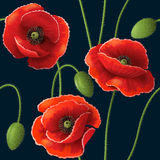 Poppy pattern on dark Stock Image