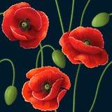 Poppy pattern on dark Stock Image