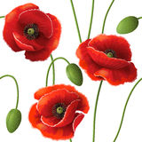 Poppy pattern Royalty Free Stock Photo