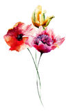 Poppy, Peony and Tulip flowers Stock Image