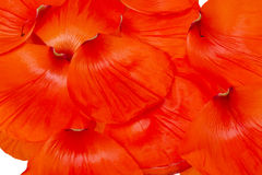 Poppy petals Royalty Free Stock Image