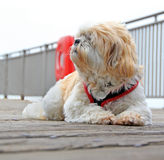 Poppy on the pier Stock Photos