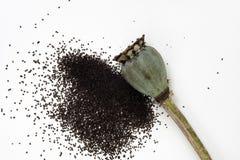 Poppy Pod orientale ouverte avec les graines minuscules Photo stock