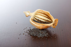 Poppy pod and seeds Royalty Free Stock Photos