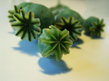 Poppy Pods. On Withe Background stock photo
