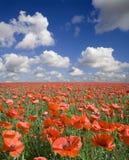 poppy pola Zdjęcie Royalty Free
