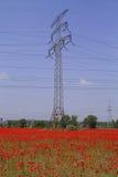 poppy pola energii elektrycznej Zdjęcia Royalty Free