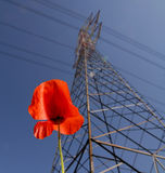 Poppy and Pylon royalty free stock photo