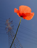 Poppy and Pylon royalty free stock photos