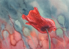 Poppy with rain drops watercolor Stock Image