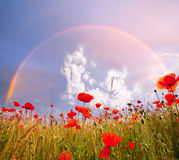 Poppy. And rainbow Stock Images