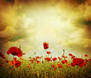 Poppy red Royalty Free Stock Photography