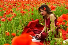 Poppy, Remembrance or Anzac Day. Opium poppy, agile business, ecology. Woman writer in poppy flower field. Journalism and writing, summer. Drug, narcotics stock photos