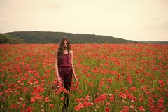 Poppy, Remembrance day, Anzac Day. Drug and love intoxication, opium, medicinal. Woman in poppy flower field, harvest. Opium poppy, botanical plant, ecology stock photo