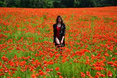 Poppy, Remembrance day, Anzac Day. Opium poppy, botanical plant, ecology, woman. Drug and love intoxication, opium, medicinal. Woman in poppy flower field stock photo