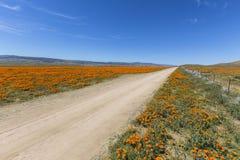 Poppy Road vicino a Lancaster California immagine stock