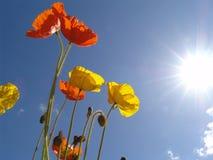 poppy, słońce Zdjęcia Stock