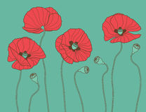 Poppy's - vector illustration Royalty Free Stock Photography
