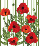 Poppy seamless. Seamless texture with poppies. Vector illustration Stock Images