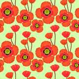 Poppy seamless pattern. Stock Image
