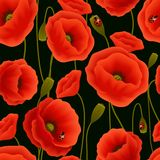 Poppy seamless pattern Royalty Free Stock Photography