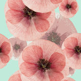 Poppy. Seamless pattern texture of pressed dry flowers. Stock Photos