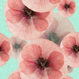 Poppy. Seamless pattern texture of pressed dry flowers. Stock Images