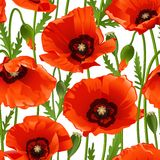 Poppy seamless pattern Royalty Free Stock Image